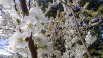 Florecillas blancas.